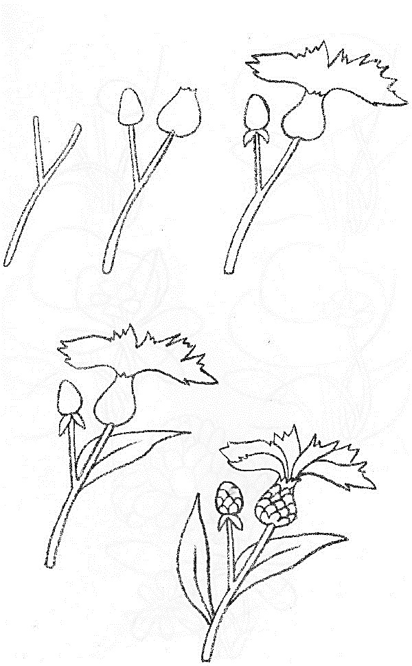 Wildflowers drawing 6