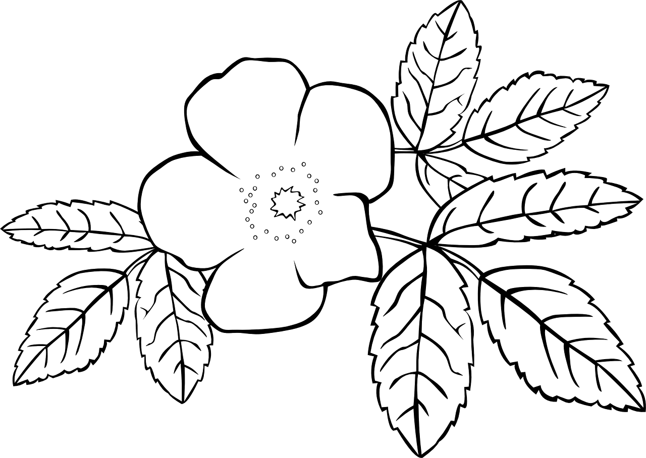 Wildflowers drawing - coloring pages free for kids 7