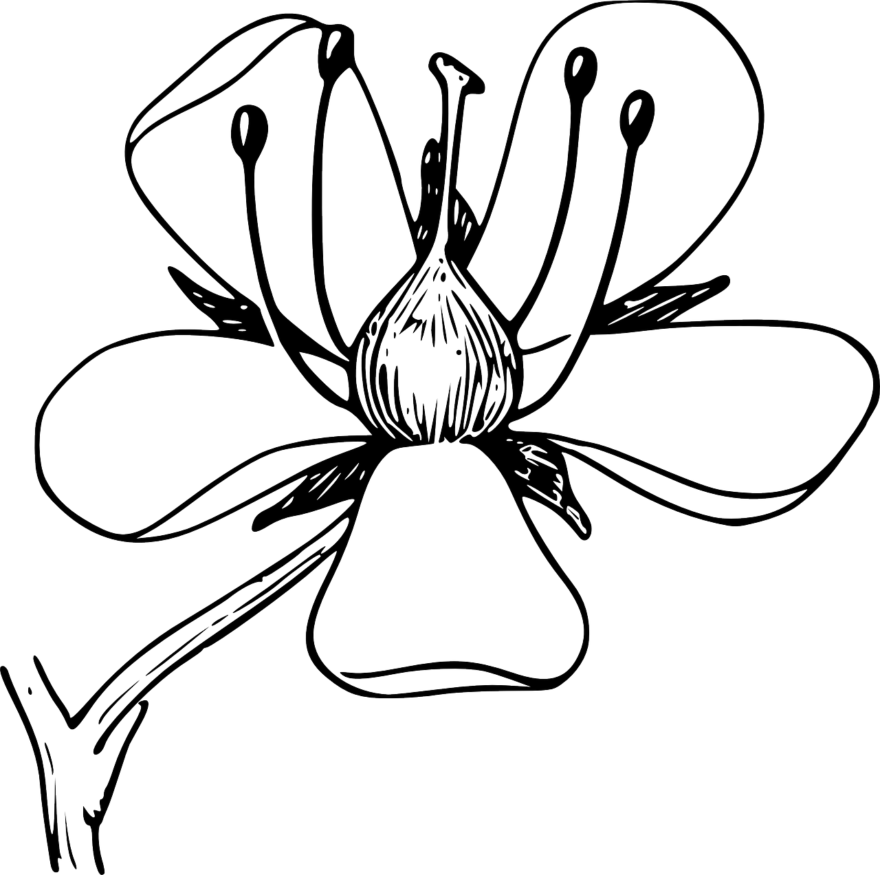 Wildflowers drawing - coloring pages free for kids 8