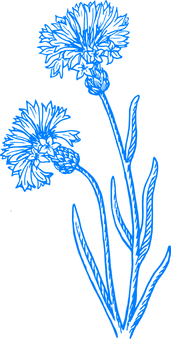 Wildflowers drawing - stencils 18