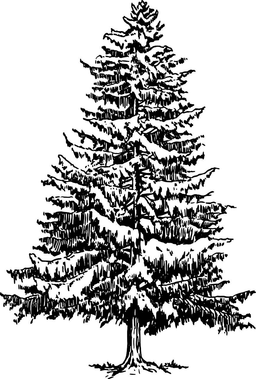 how to draw a Christmas tree, stencil 1