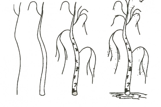 how to draw a birch tree 1