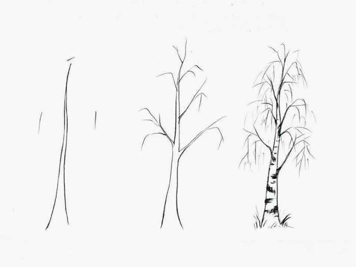 how to draw a birch tree 3