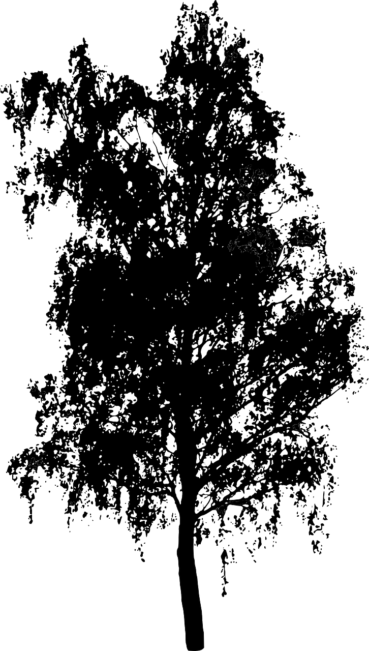 how to draw a birch tree, stencils 1