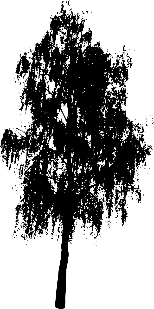 how to draw a birch tree, stencils