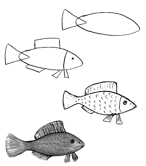 how to draw a fish 1