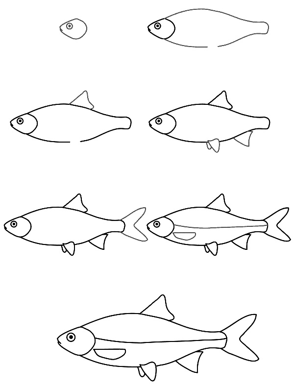how to draw a fish 11