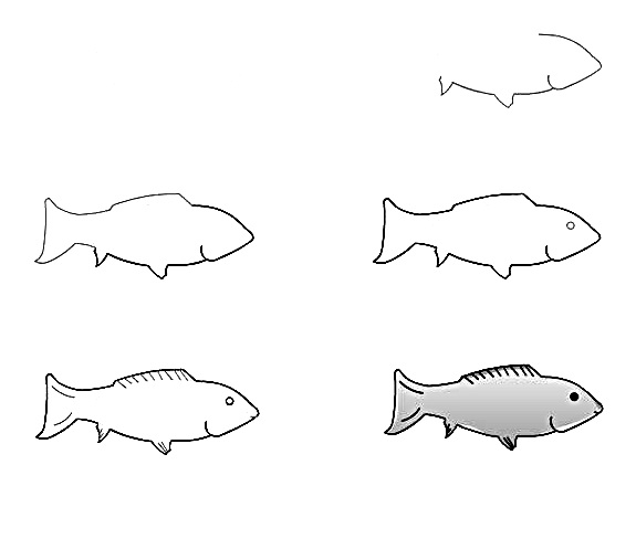 how to draw a fish 18