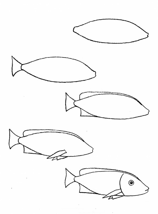 how to draw a fish 24
