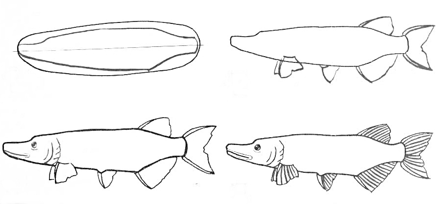 how to draw a fish 25