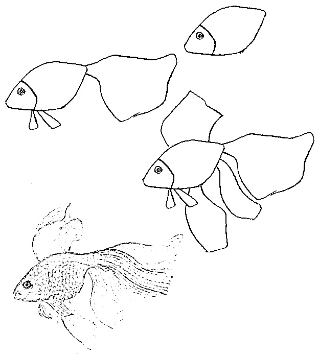 how to draw a fish 3
