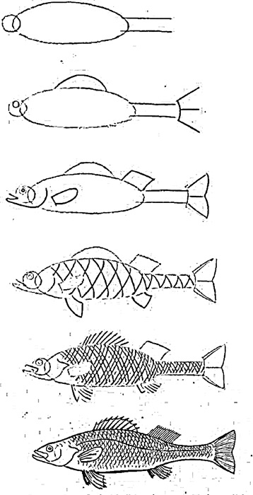 how to draw a fish 38