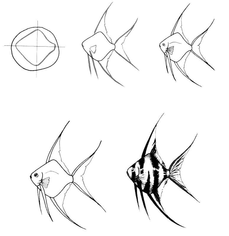 how to draw a fish 46