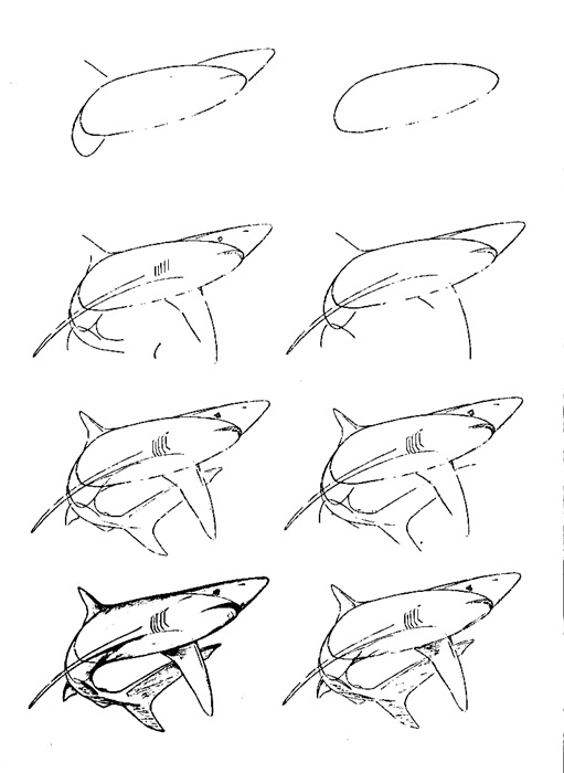 how to draw a fish 65
