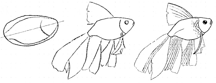 how to draw a fish 9