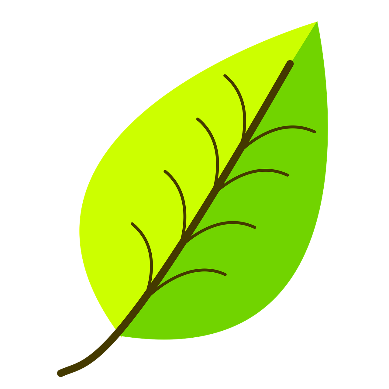 how to draw a leaf 5