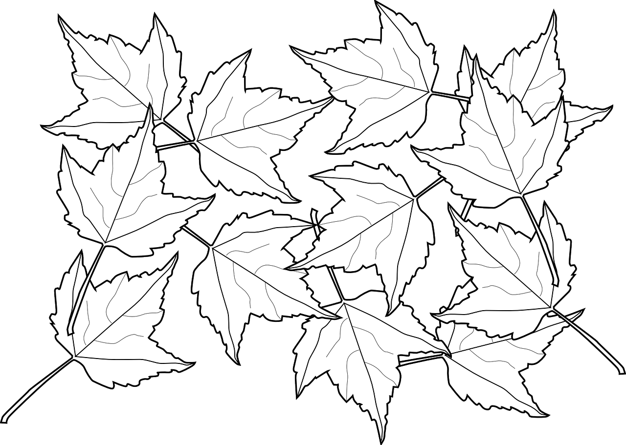 how to draw a leaf free printable leaf coloring pages 6