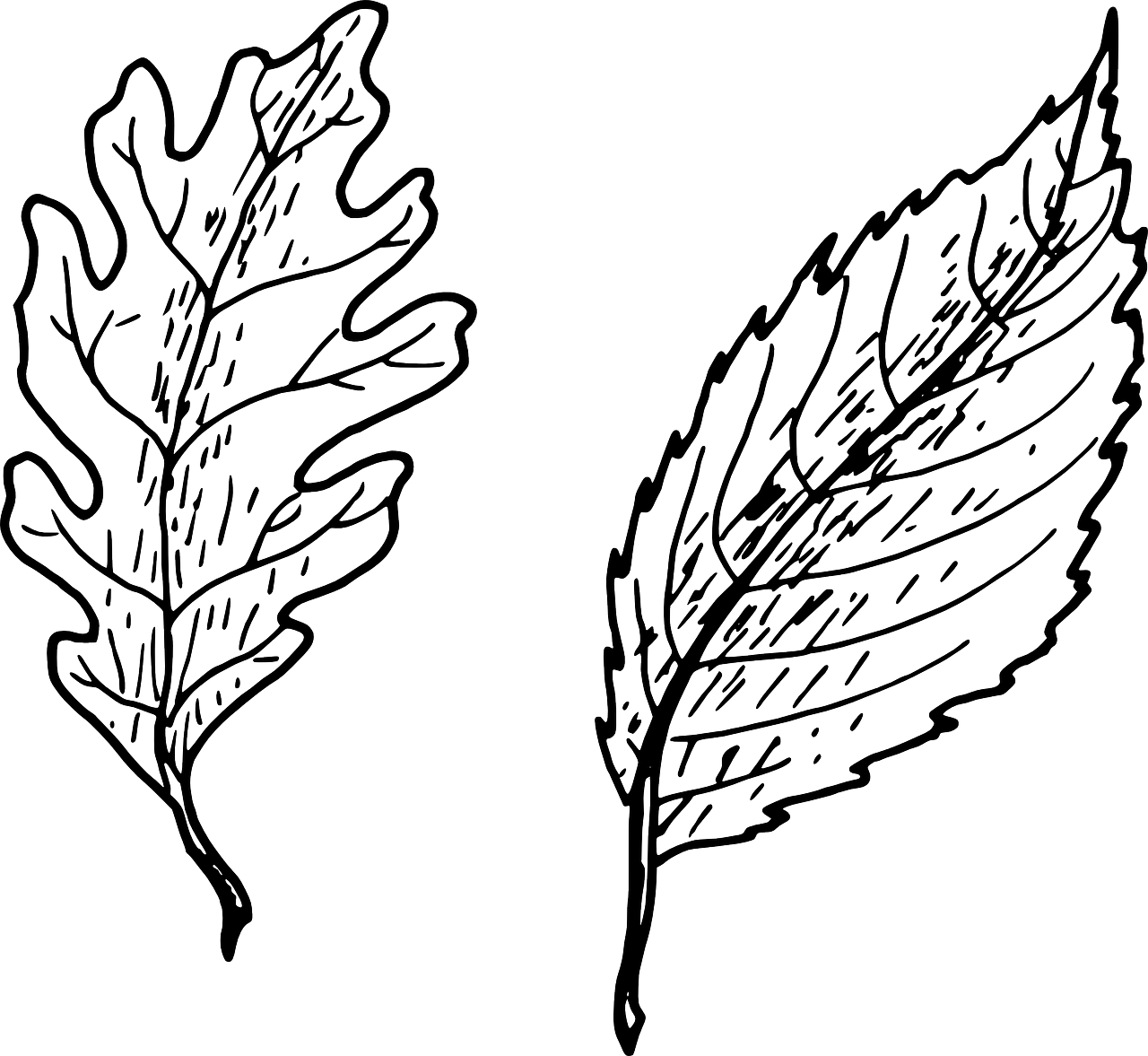 how to draw a leaf free printable leaf coloring pages 8