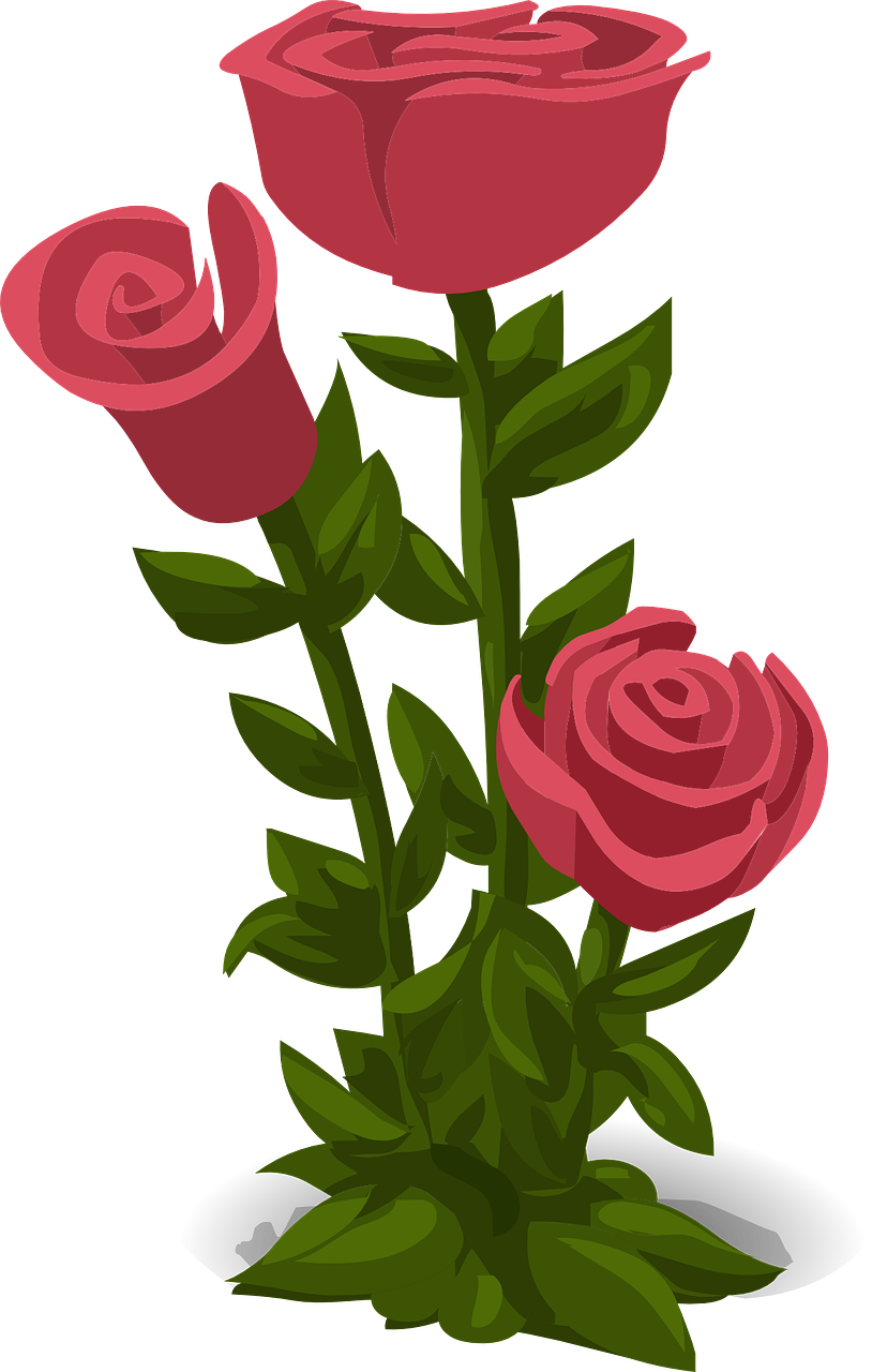 how to draw a rose 5