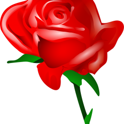 how to make a rose 4