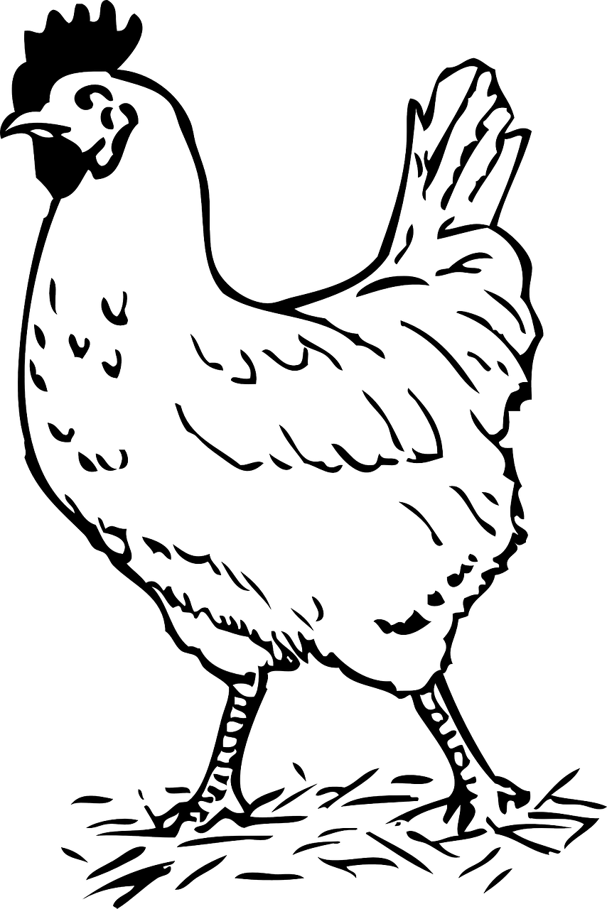 How to draw a cock: free printable cock stencils 8